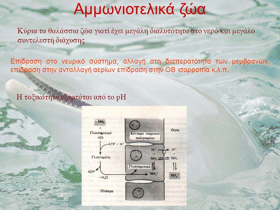 Αμμωνιοτελικά ζώα Κύρια τα θαλάσσια ζώα γιατί έχει μεγάλη διαλυτότητα στο νερό και μεγάλο συντελεστή διάχυσης Επίδραση στο νευρικό σύστημα, αλλαγή στη διαπερατότητα των μεμβρανών, επίδραση στην ανταλλαγή αερίων επίδραση στην ΟΒ ισορροπία κ.
