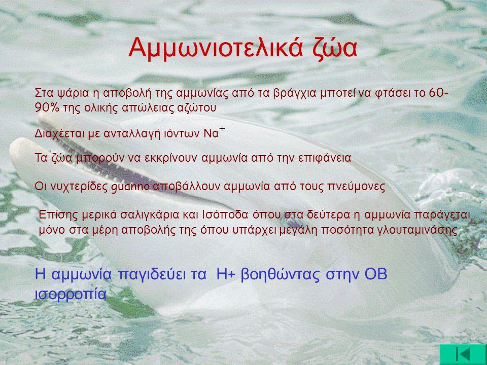Αμμωνιοτελικά ζώα Στα ψάρια η αποβολή της αμμωνίας από τα βράγχια μποτεί να φτάσει το 60- 90% της ολικής απώλειας αζώτου Διαχέεται με ανταλλαγή ιόντων Να + Τα ζώα μπορούν να εκκρίνουν αμμωνία από την επιφάνεια Οι νυχτερίδες guanno αποβάλλουν αμμωνία από τους πνεύμονες Επίσης μερικά σαλιγκάρια και Ισόποδα όπου στα δεύτερα η αμμωνία παράγεται μόνο στα μέρη αποβολής της όπου υπάρχει μεγάλη ποσότητα γλουταμινάσης Η αμμωνία παγιδεύει τα Η + βοηθώντας στην ΟΒ ισορροπία
