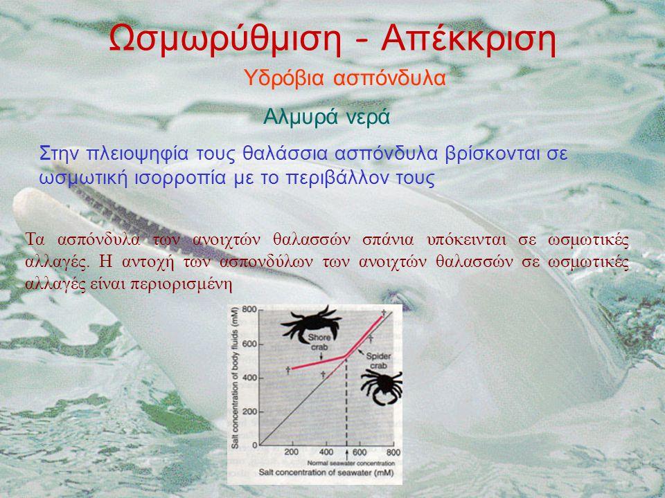 Ωσμωρύθμιση - Απέκκριση Υδρόβια ασπόνδυλα Αλμυρά νερά Στην πλειοψηφία τους θαλάσσια ασπόνδυλα βρίσκονται σε ωσμωτική ισορροπία με το περιβάλλον τους Τα ασπόνδυλα των ανοιχτών θαλασσών σπάνια υπόκεινται σε ωσμωτικές αλλαγές.