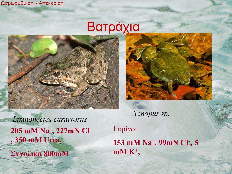 Βατράχια Ωσμωρύθμιση - Απέκκριση Limnonectes carnivorus Xenopus sp.