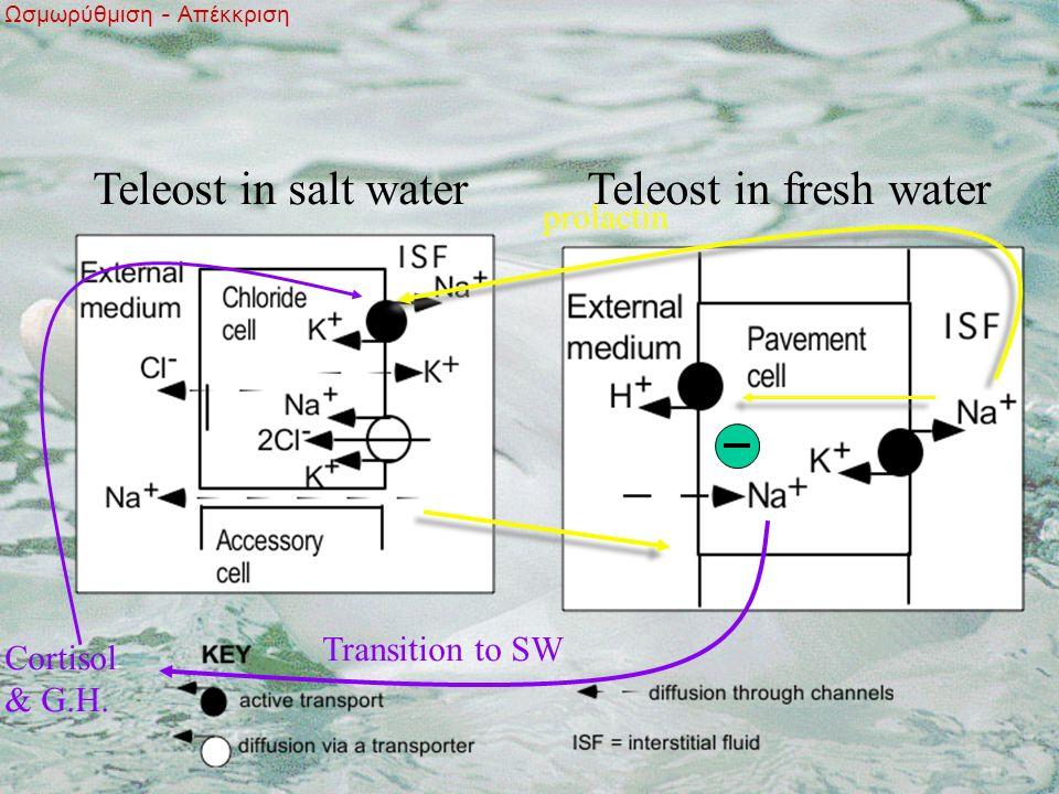 Teleost in salt waterTeleost in fresh water Cortisol & G.H.