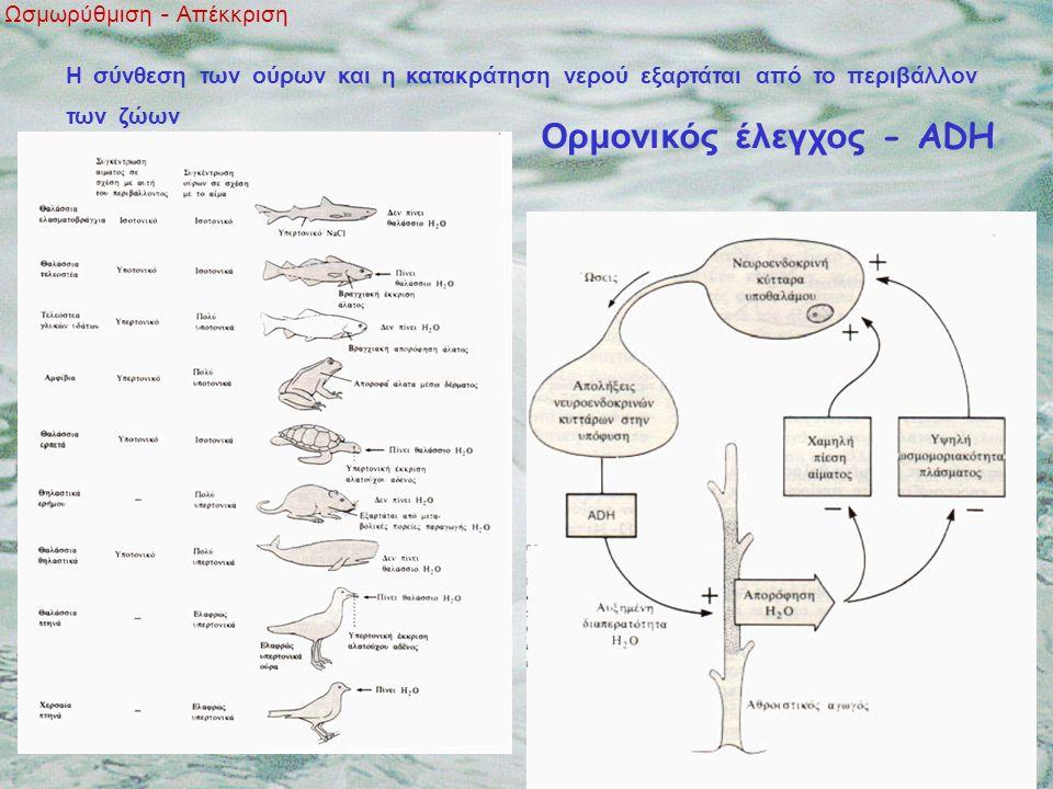 Ωσμωρύθμιση - Απέκκριση Η σύνθεση των ούρων και η κατακράτηση νερού εξαρτάται από το περιβάλλον των ζώων Ορμονικός έλεγχος - ADH