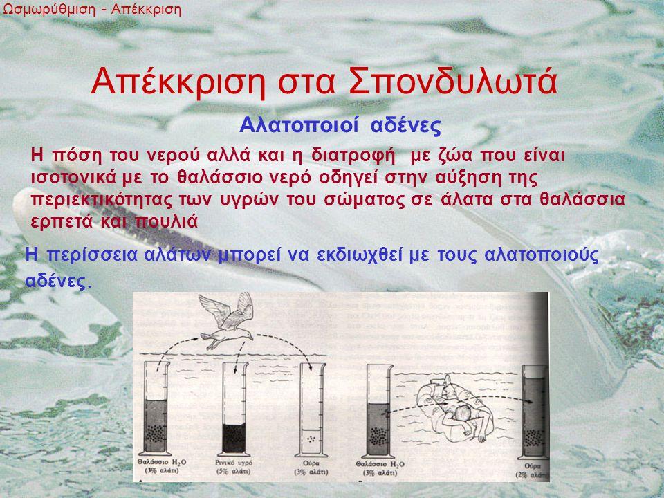 Απέκκριση στα Σπονδυλωτά Ωσμωρύθμιση - Απέκκριση Αλατοποιοί αδένες Η πόση του νερού αλλά και η διατροφή με ζώα που είναι ισοτονικά με το θαλάσσιο νερό οδηγεί στην αύξηση της περιεκτικότητας των υγρών του σώματος σε άλατα στα θαλάσσια ερπετά και πουλιά Η περίσσεια αλάτων μπορεί να εκδιωχθεί με τους αλατοποιούς αδένες.