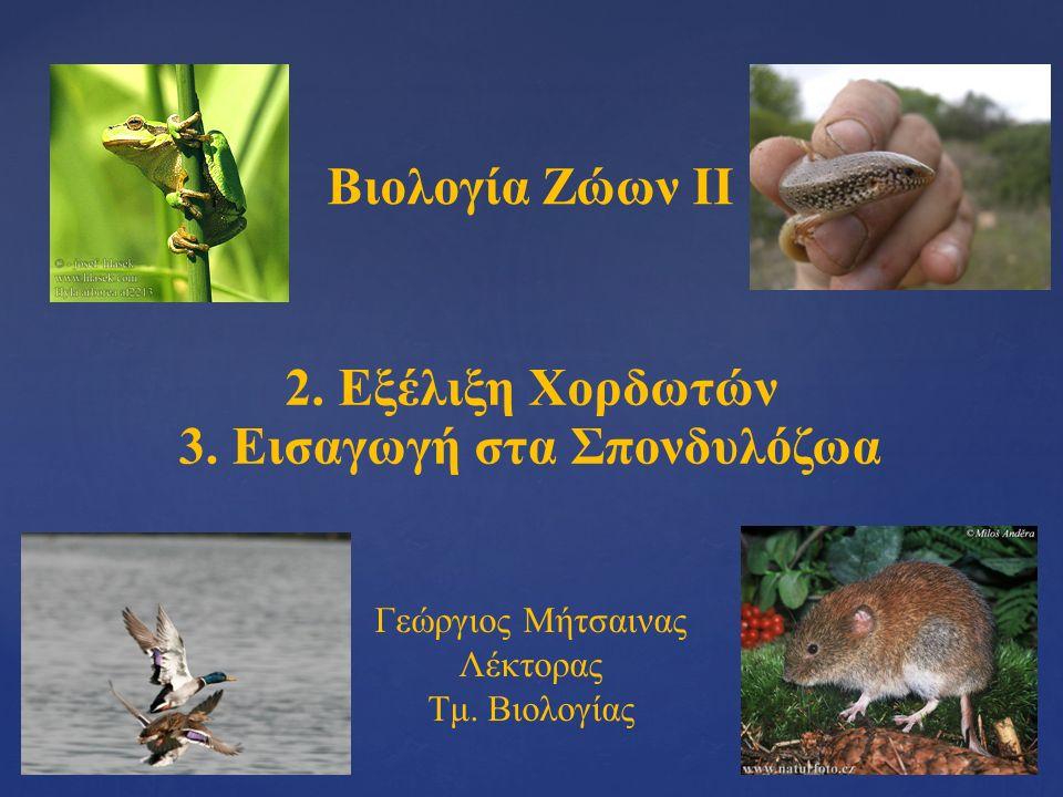 Βιολογία Ζώων ΙΙ 2. Εξέλιξη Χορδωτών Γεώργιος Μήτσαινας Λέκτορας Τμ.