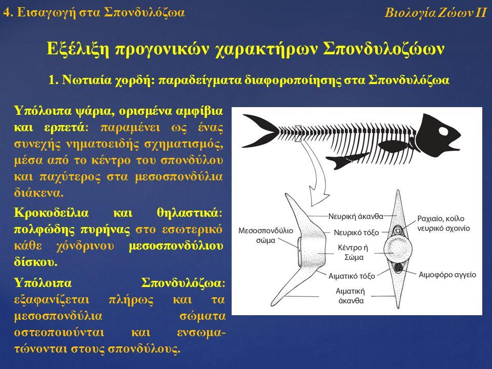 Εξέλιξη προγονικών χαρακτήρων Σπονδυλοζώων 1.