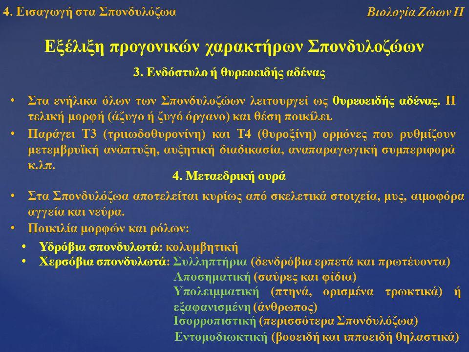 Εξέλιξη προγονικών χαρακτήρων Σπονδυλοζώων 3.