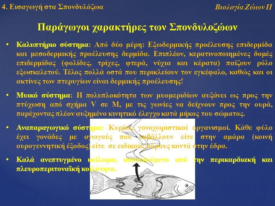 Παράγωγοι χαρακτήρες των Σπονδυλοζώων Καλυπτήριο σύστημα: Από δύο μέρη: Εξωδερμικής προέλευσης επιδερμίδα και μεσοδερμικής προέλευσης δερμίδα.