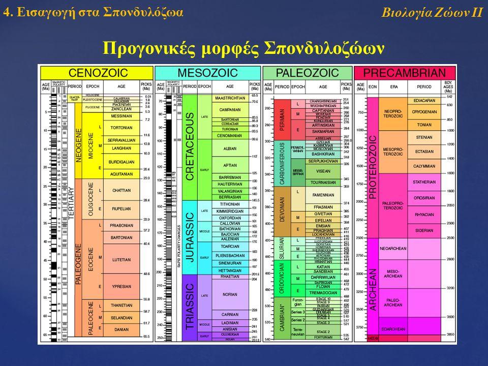 Βιολογία Ζώων ΙΙ 4. Εισαγωγή στα Σπονδυλόζωα Προγονικές μορφές Σπονδυλοζώων