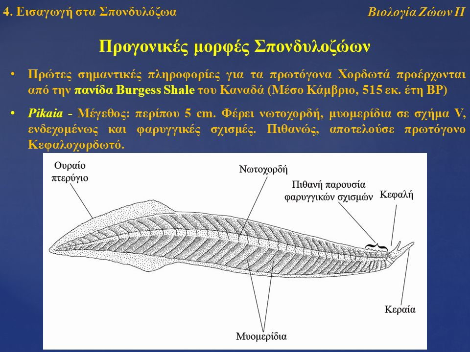Βιολογία Ζώων ΙΙ 4.