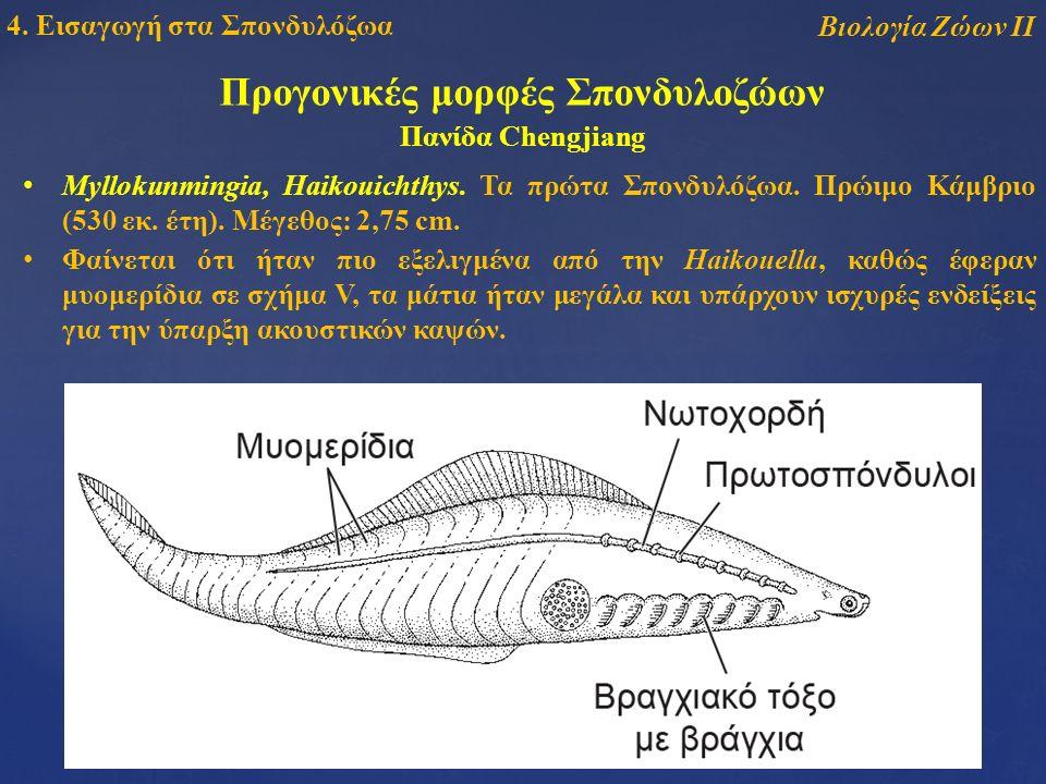 Βιολογία Ζώων ΙΙ 4. Εισαγωγή στα Σπονδυλόζωα Myllokunmingia, Haikouichthys.