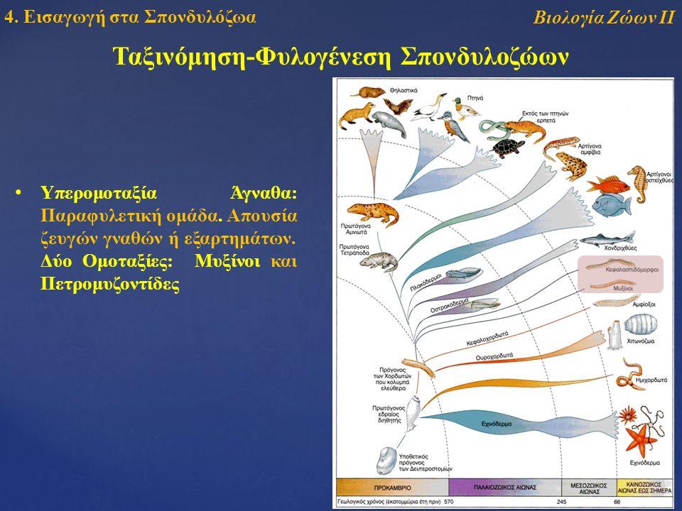Ταξινόμηση-Φυλογένεση Σπονδυλοζώων Βιολογία Ζώων ΙΙ 4.