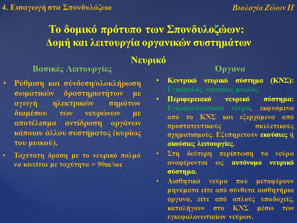 Το δομικό πρότυπο των Σπονδυλοζώων: Δομή και λειτουργία οργανικών συστημάτων Βιολογία Ζώων ΙΙ 4.