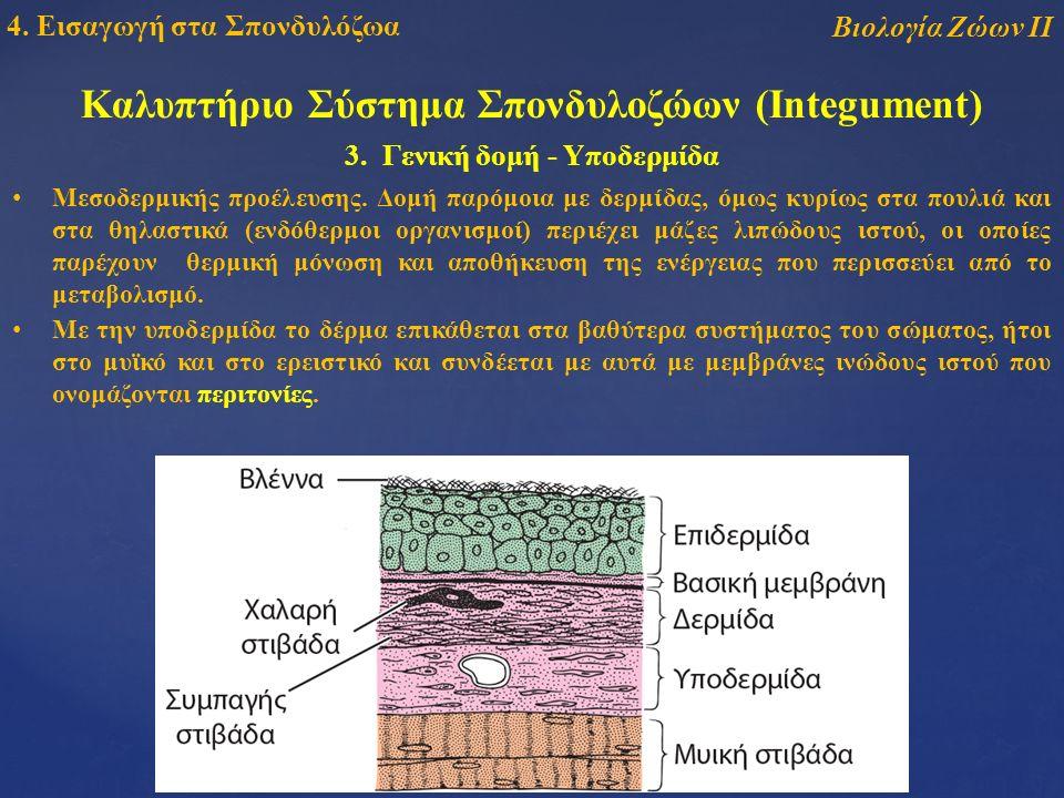 Καλυπτήριο Σύστημα Σπονδυλοζώων (Integument) Βιολογία Ζώων ΙΙ 4.