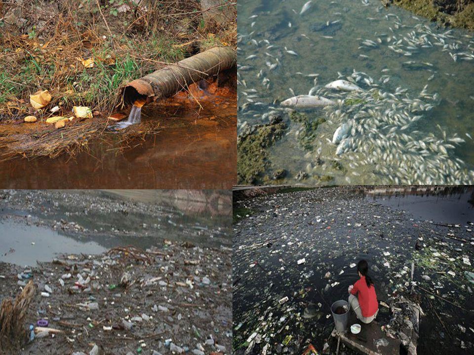 Σκουπίδια στις Θάλασσες Τα απορρίμματα στη θάλασσα και τις ακτές ευθύνονται για χιλιάδες θανάτους και τραυματισμούς ζώων, αλλά και για την αλλοίωση το