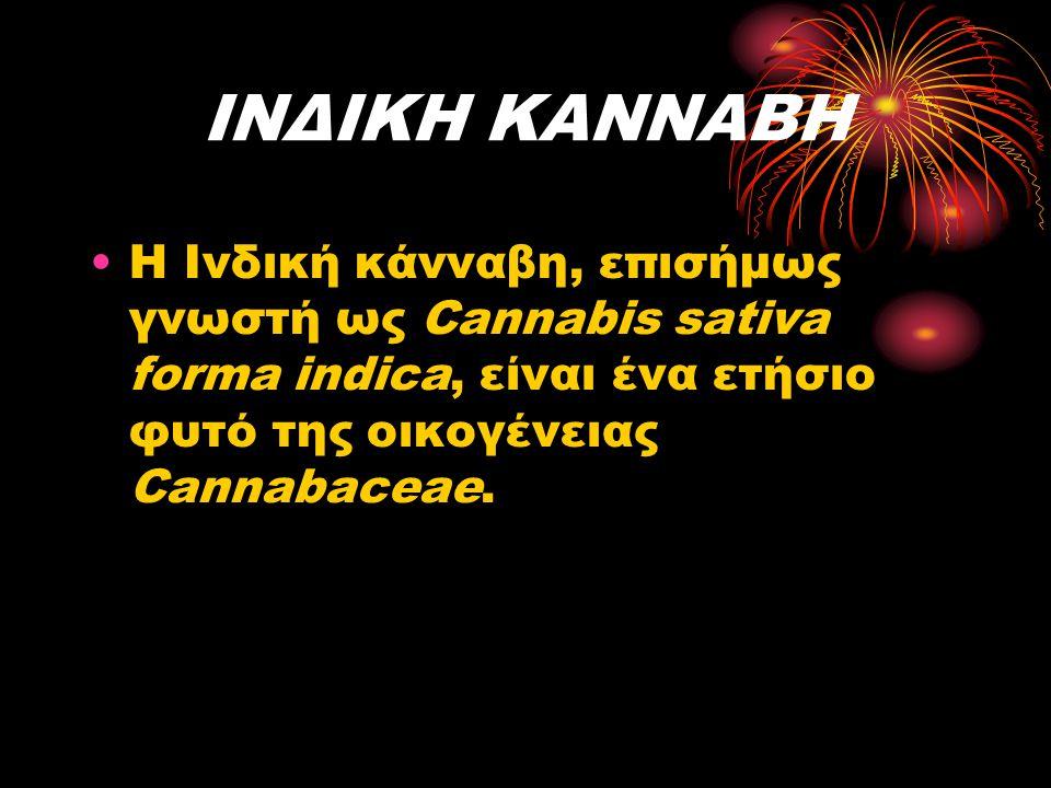 ΙΝΔΙΚΗ ΚΑΝΝΑΒΗ Η Ινδική κάνναβη, επισήμως γνωστή ως Cannabis sativa forma indica, είναι ένα ετήσιο φυτό της οικογένειας Cannabaceae.