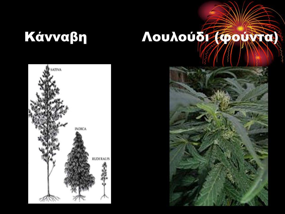 Κάνναβη Λουλούδι (φούντα)