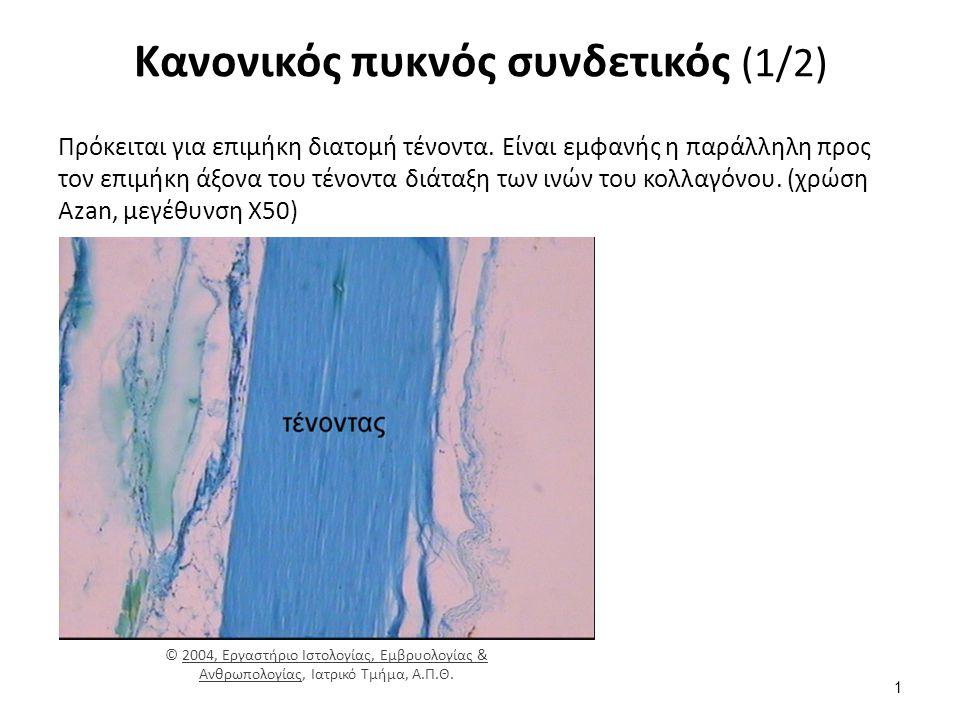Κανονικός πυκνός συνδετικός (1/2) Πρόκειται για επιμήκη διατομή τένοντα.