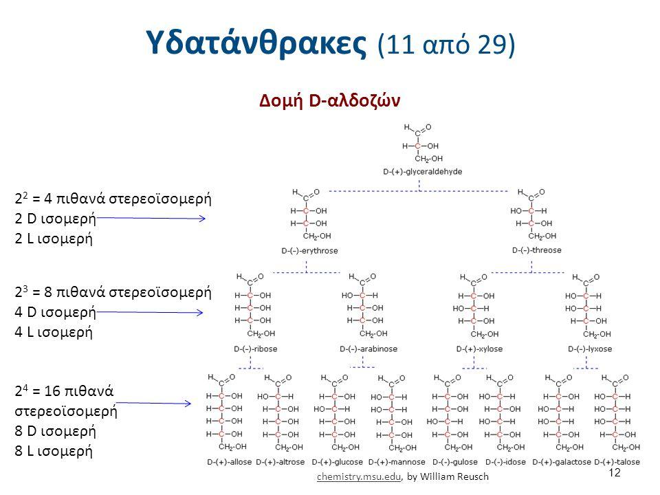 Υδατάνθρακες (11 από 29) Δομή D-αλδοζών 12 2 4 = 16 πιθανά στερεοϊσομερή 8 D ισομερή 8 L ισομερή 2 3 = 8 πιθανά στερεοϊσομερή 4 D ισομερή 4 L ισομερή 2 2 = 4 πιθανά στερεοϊσομερή 2 D ισομερή 2 L ισομερή chemistry.msu.educhemistry.msu.edu, by William Reusch
