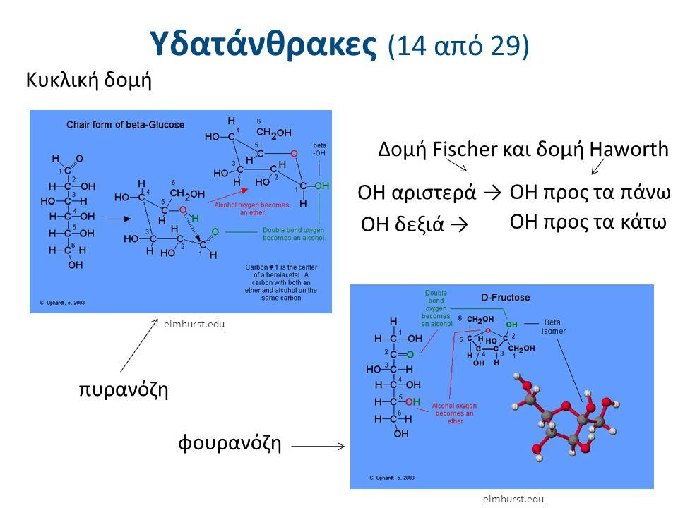 Υδατάνθρακες (14 από 29) 15 Κυκλική δομή Δομή Fischer και δομή Haworth OH αριστερά → OH προς τα πάνω OH δεξιά → OH προς τα κάτω πυρανόζη φουρανόζη elm