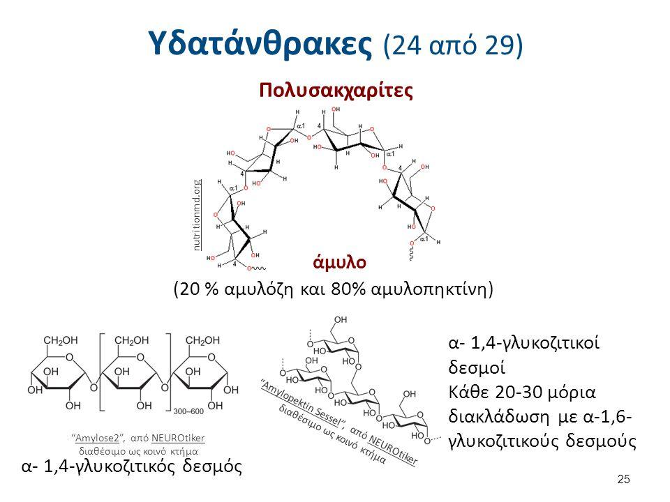 Υδατάνθρακες (24 από 29) Πολυσακχαρίτες 25 nutritionmd.org άμυλο (20 % αμυλόζη και 80% αμυλοπηκτίνη) Amylopektin Sessel , από NEUROtiker διαθέσιμο ως κοινό κτήμαAmylopektin SesselNEUROtiker α- 1,4-γλυκοζιτικός δεσμός Amylose2 , από NEUROtiker διαθέσιμο ως κοινό κτήμαAmylose2NEUROtiker α- 1,4-γλυκοζιτικοί δεσμοί Κάθε 20-30 μόρια διακλάδωση με α-1,6- γλυκοζιτικούς δεσμούς