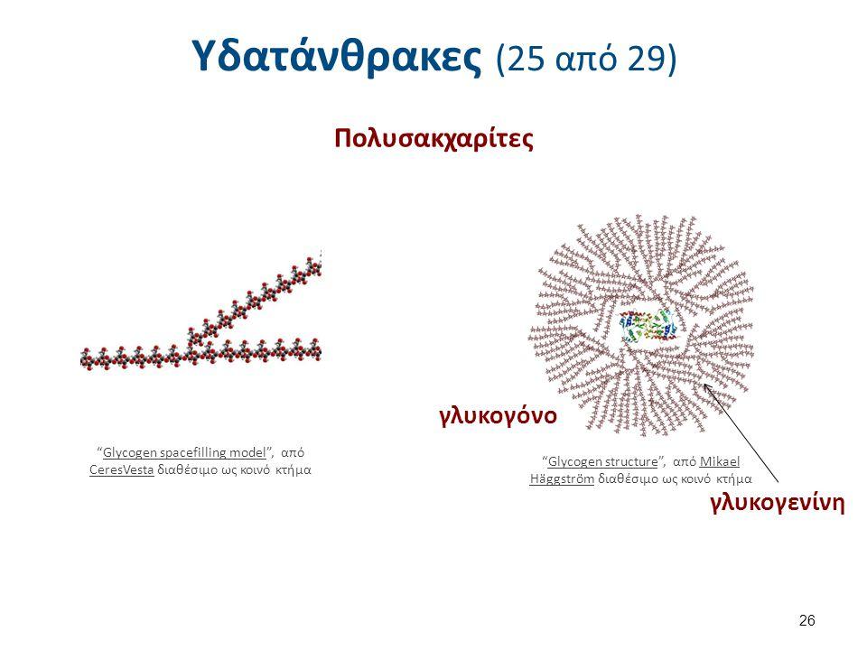Υδατάνθρακες (25 από 29) Πολυσακχαρίτες 26 Glycogen spacefilling model , από CeresVesta διαθέσιμο ως κοινό κτήμαGlycogen spacefilling model CeresVesta Glycogen structure , από Mikael Häggström διαθέσιμο ως κοινό κτήμαGlycogen structureMikael Häggström γλυκογόνο γλυκογενίνη