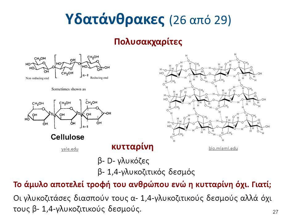 Υδατάνθρακες (26 από 29) 27 Πολυσακχαρίτες yale.edu bio.miami.edu κυτταρίνη β- D- γλυκόζες β- 1,4-γλυκοζιτικός δεσμός Το άμυλο αποτελεί τροφή του ανθρώπου ενώ η κυτταρίνη όχι.