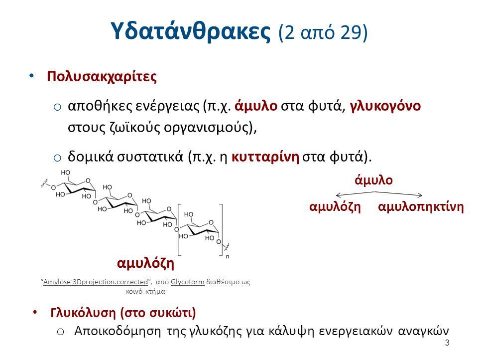 Υδατάνθρακες (2 από 29) Πολυσακχαρίτες o αποθήκες ενέργειας (π.χ.