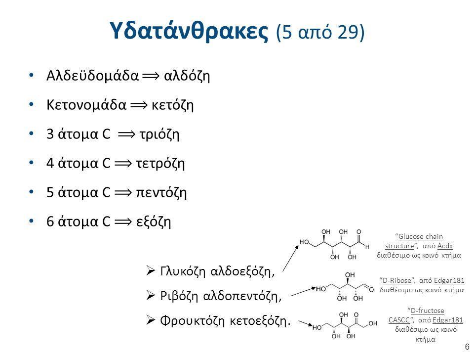 Υδατάνθρακες (5 από 29) Αλδεϋδομάδα ⟹ αλδόζη Κετονομάδα ⟹ κετόζη 3 άτομα C ⟹ τριόζη 4 άτομα C ⟹ τετρόζη 5 άτομα C ⟹ πεντόζη 6 άτομα C ⟹ εξόζη 6  Γλυκόζη αλδοεξόζη,  Ριβόζη αλδοπεντόζη,  Φρουκτόζη κετοεξόζη.