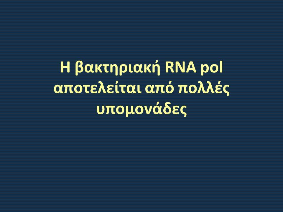 Η βακτηριακή RNA pol αποτελείται από πολλές υπομονάδες