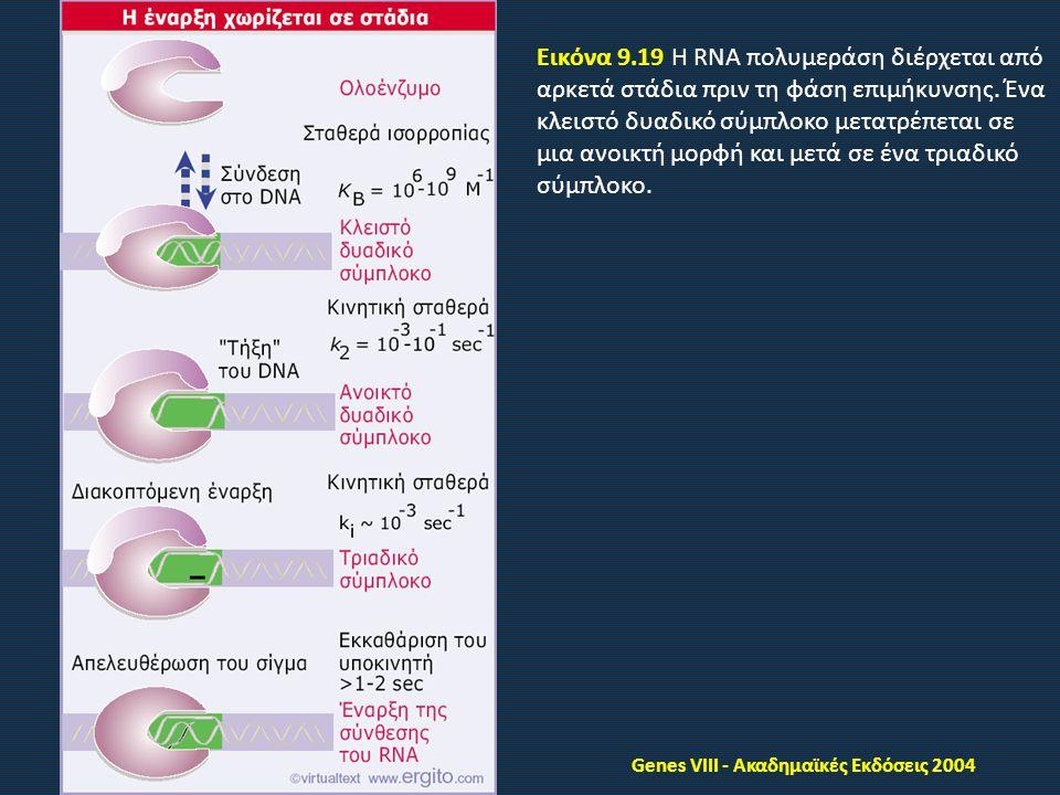 Genes VIII - Ακαδημαϊκές Εκδόσεις 2004 Εικόνα 9.19 Η RNA πολυμεράση διέρχεται από αρκετά στάδια πριν τη φάση επιμήκυνσης.