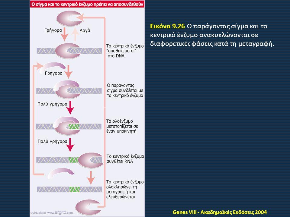 Genes VIII - Ακαδημαϊκές Εκδόσεις 2004 Εικόνα 9.26 Ο παράγοντας σίγμα και το κεντρικό ένζυμο ανακυκλώνονται σε διαφορετικές φάσεις κατά τη μεταγραφή.