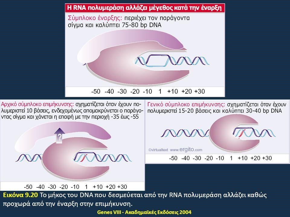 Genes VIII - Ακαδημαϊκές Εκδόσεις 2004 Εικόνα 9.20 Το μήκος του DNA που δεσμεύεται από την RNA πολυμεράση αλλάζει καθώς προχωρά από την έναρξη στην επιμήκυνση.