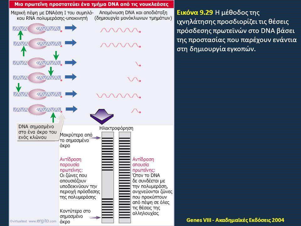 Genes VIII - Ακαδημαϊκές Εκδόσεις 2004 Εικόνα 9.29 Η μέθοδος της ιχνηλάτησης προσδιορίζει τις θέσεις πρόσδεσης πρωτεϊνών στο DNA βάσει της προστασίας που παρέχουν ενάντια στη δημιουργία εγκοπών.