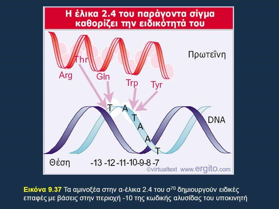 Εικόνα 9.37 Τα αμινοξέα στην α-έλικα 2.4 του σ 70 δημιουργούν ειδικές επαφές με βάσεις στην περιοχή -10 της κωδικής αλυσίδας του υποκινητή