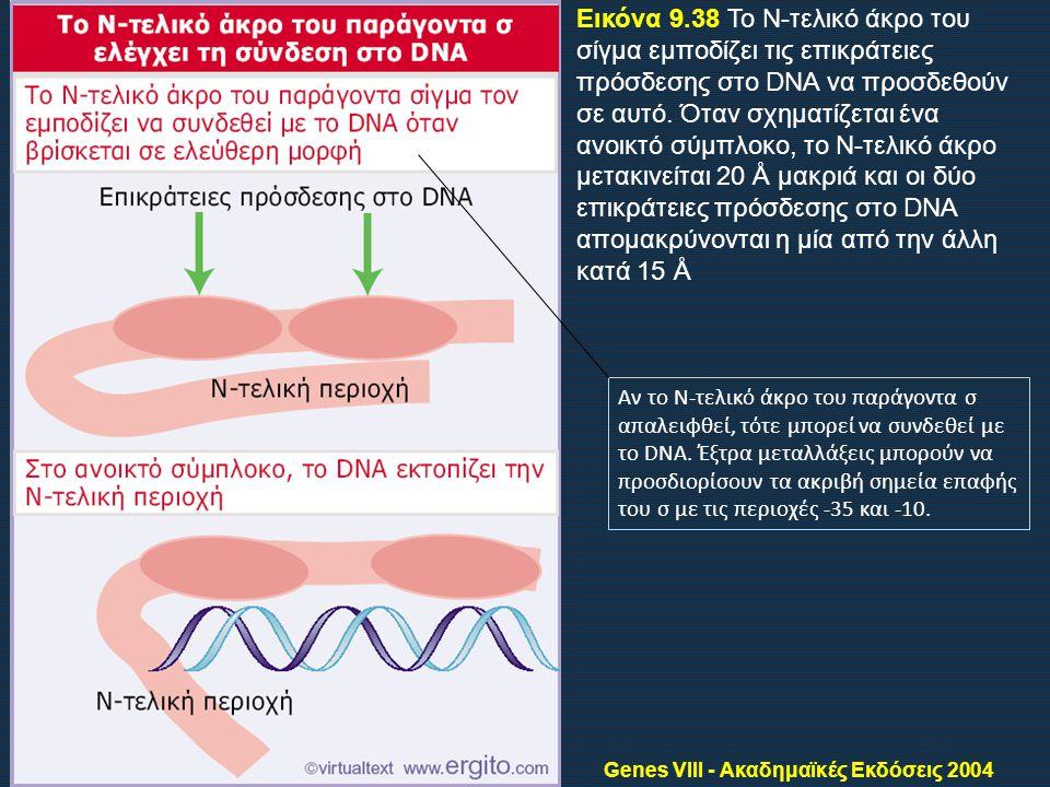 Genes VIII - Ακαδημαϊκές Εκδόσεις 2004 Εικόνα 9.38 Το Ν-τελικό άκρο του σίγμα εμποδίζει τις επικράτειες πρόσδεσης στο DNA να προσδεθούν σε αυτό.