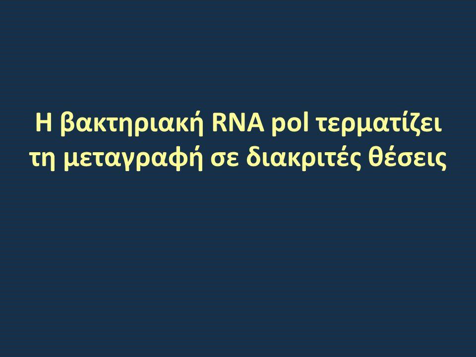 Η βακτηριακή RNA pol τερματίζει τη μεταγραφή σε διακριτές θέσεις