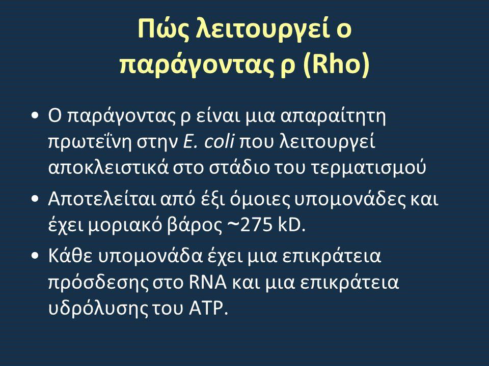 Πώς λειτουργεί ο παράγοντας ρ (Rho) Ο παράγοντας ρ είναι μια απαραίτητη πρωτεΐνη στην E.