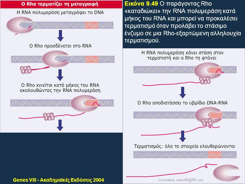 Genes VIII - Ακαδημαϊκές Εκδόσεις 2004 Εικόνα 9.49 Ο παράγοντας Rho «καταδιώκει» την RNA πολυμεράση κατά μήκος του RNA και μπορεί να προκαλέσει τερματισμό όταν προλάβει το στάσιμο ένζυμο σε μια Rho-εξαρτώμενη αλληλουχία τερματισμού.