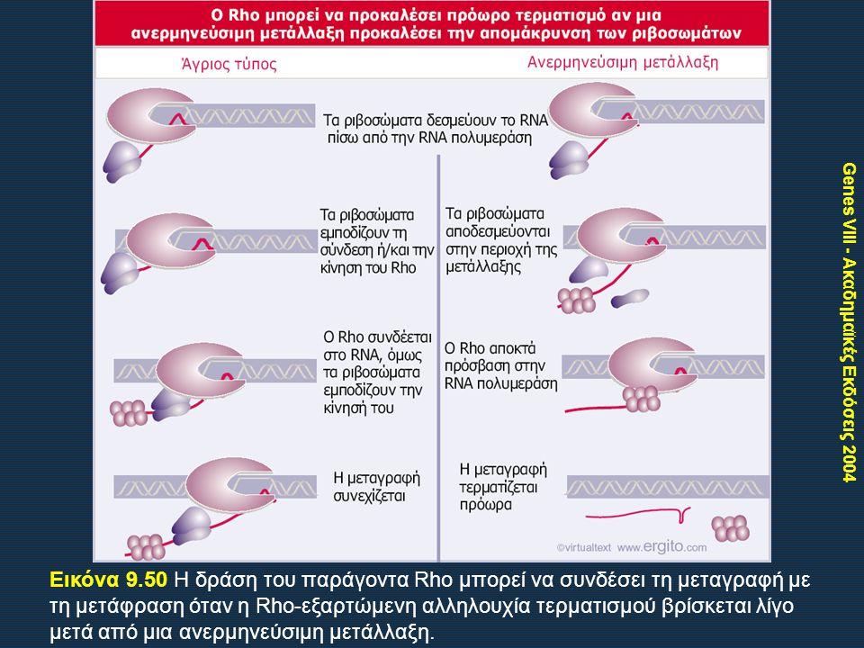 Genes VIII - Ακαδημαϊκές Εκδόσεις 2004 Εικόνα 9.50 Η δράση του παράγοντα Rho μπορεί να συνδέσει τη μεταγραφή με τη μετάφραση όταν η Rho-εξαρτώμενη αλληλουχία τερματισμού βρίσκεται λίγο μετά από μια ανερμηνεύσιμη μετάλλαξη.