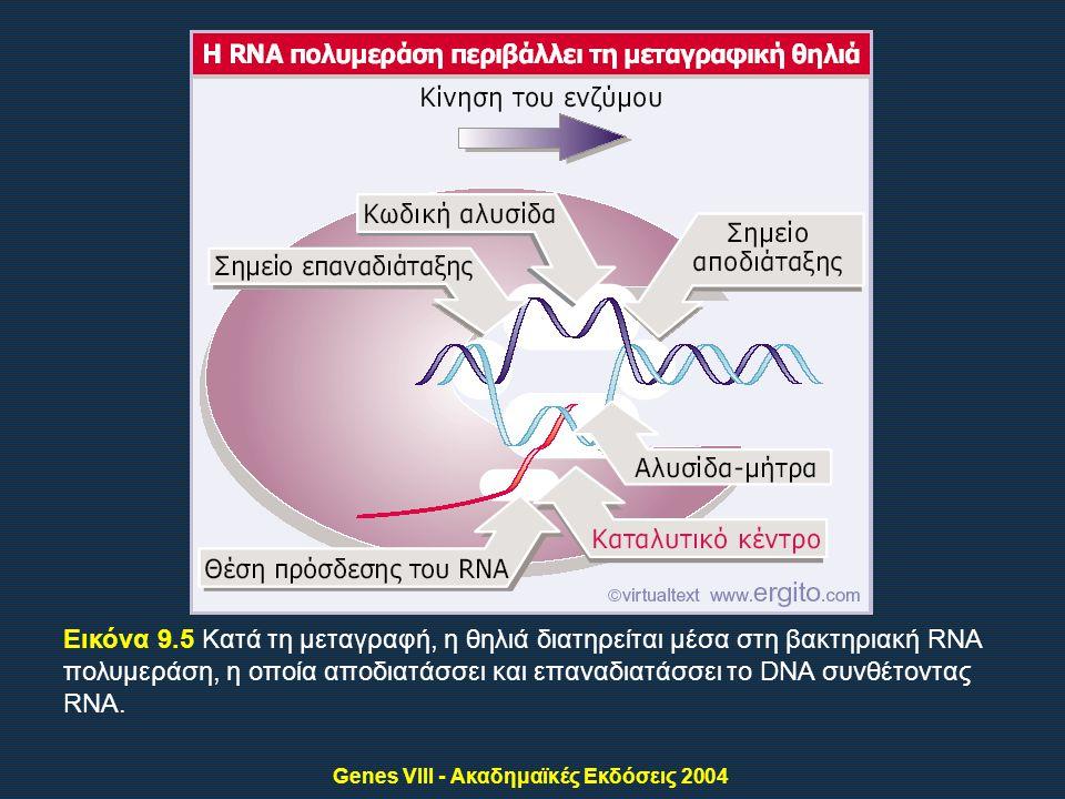Genes VIII - Ακαδημαϊκές Εκδόσεις 2004 Εικόνα 9.5 Κατά τη μεταγραφή, η θηλιά διατηρείται μέσα στη βακτηριακή RNA πολυμεράση, η οποία αποδιατάσσει και επαναδιατάσσει το DNA συνθέτοντας RNA.