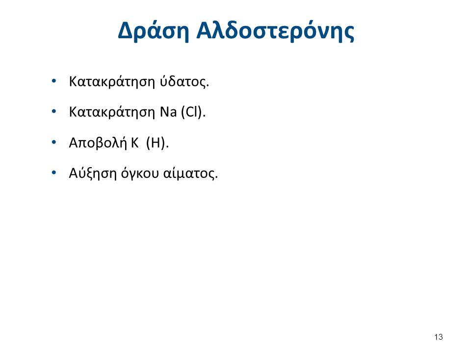 Δράση Αλδοστερόνης Κατακράτηση ύδατος. Κατακράτηση Na (Cl). Αποβολή Κ (Η). Αύξηση όγκου αίματος. 13