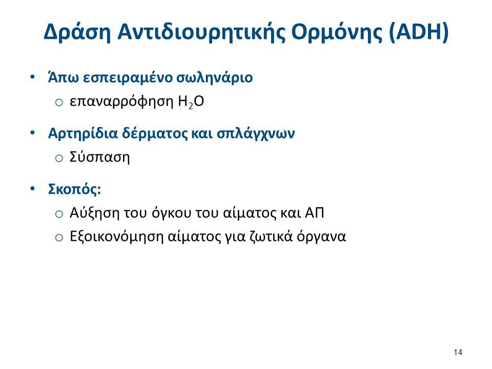 Δράση Αντιδιουρητικής Ορμόνης (ADH) Άπω εσπειραμένο σωληνάριο o επαναρρόφηση Η 2 Ο Αρτηρίδια δέρματος και σπλάγχνων o Σύσπαση Σκοπός: o Αύξηση του όγκ