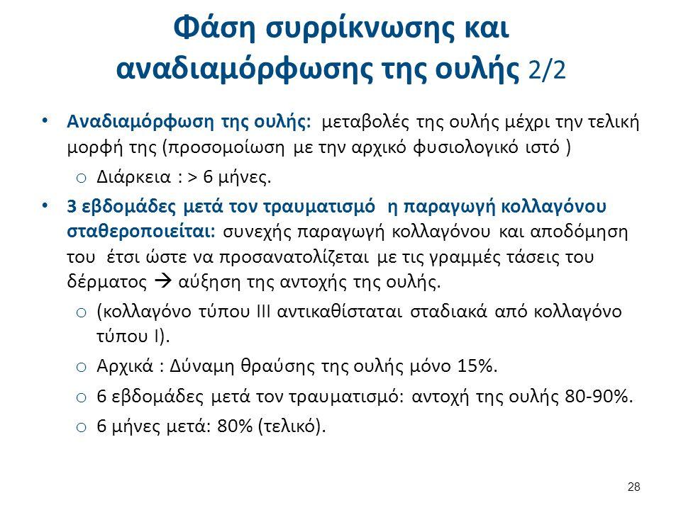 Φάση συρρίκνωσης και αναδιαμόρφωσης της ουλής 2/2 28 Αναδιαμόρφωση της ουλής: μεταβολές της ουλής μέχρι την τελική μορφή της (προσομοίωση με την αρχικ