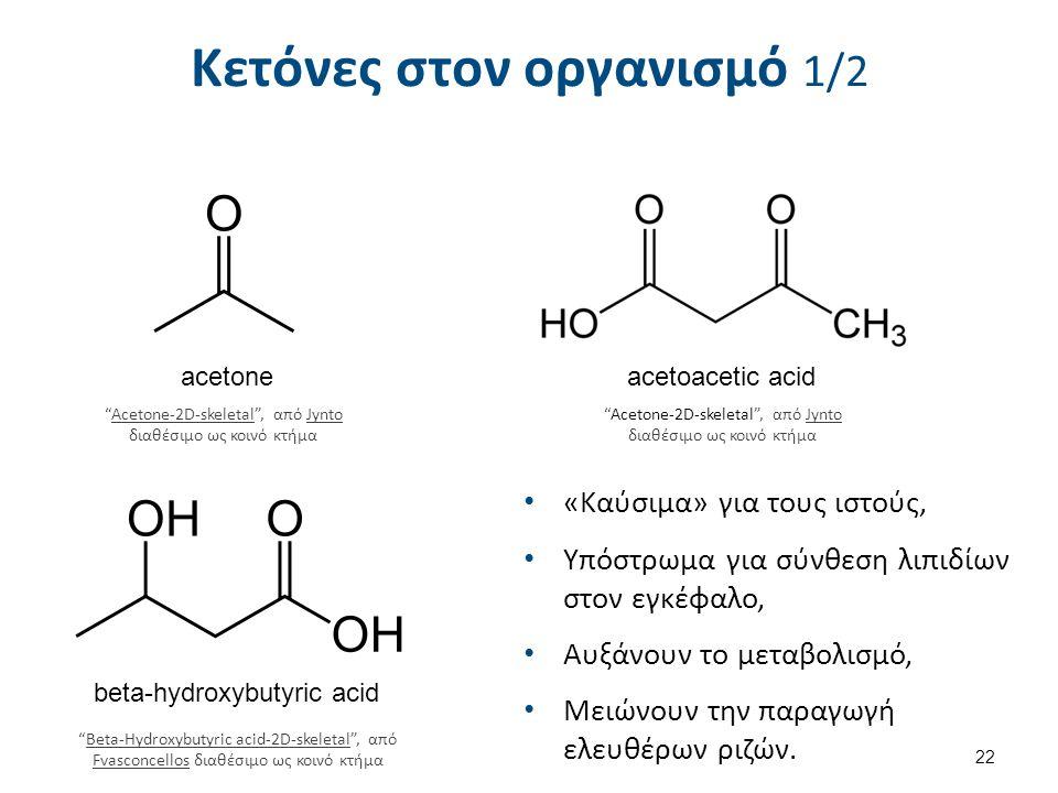 Κετόνες στον οργανισμό 1/2 «Καύσιμα» για τους ιστούς, Υπόστρωμα για σύνθεση λιπιδίων στον εγκέφαλο, Αυξάνουν το μεταβολισμό, Μειώνουν την παραγωγή ελε