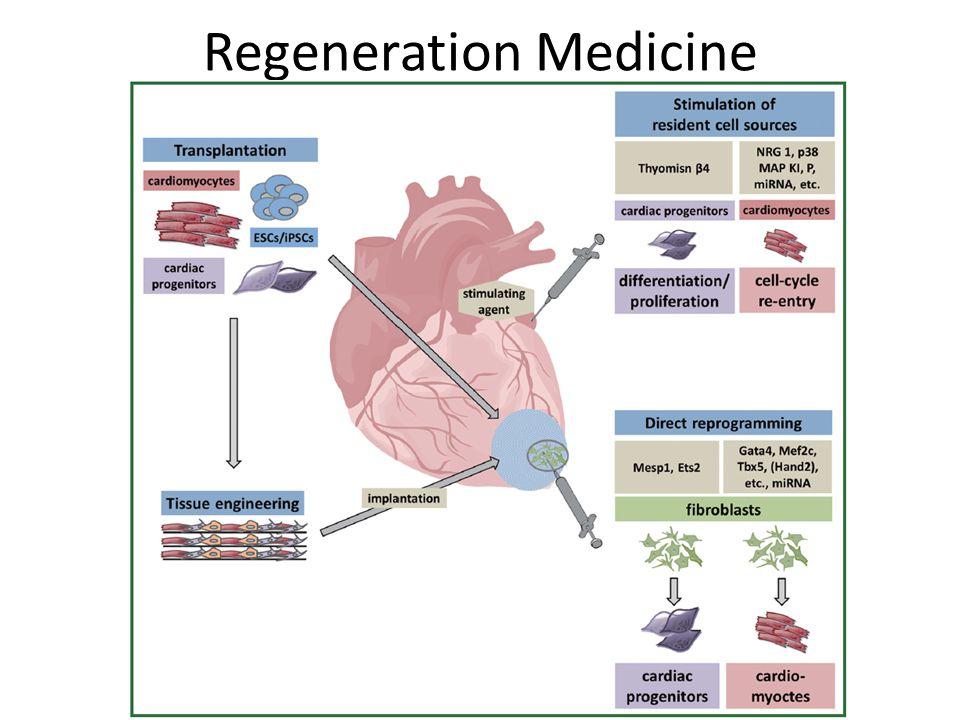 Rat model of myocardial infarction