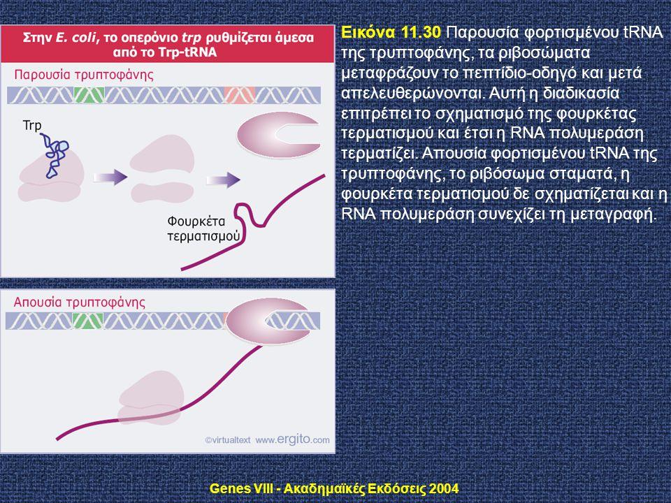 Genes VIII - Ακαδημαϊκές Εκδόσεις 2004 Εικόνα 11.30 Παρουσία φορτισμένου tRNA της τρυπτοφάνης, τα ριβοσώματα μεταφράζουν το πεπτίδιο-οδηγό και μετά απ