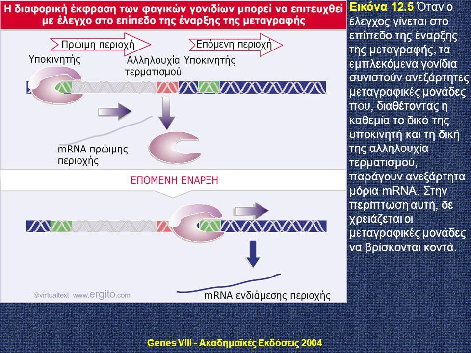 Genes VIII - Ακαδημαϊκές Εκδόσεις 2004 Εικόνα 12.5 Όταν ο έλεγχος γίνεται στο επίπεδο της έναρξης της μεταγραφής, τα εμπλεκόμενα γονίδια συνιστούν ανε