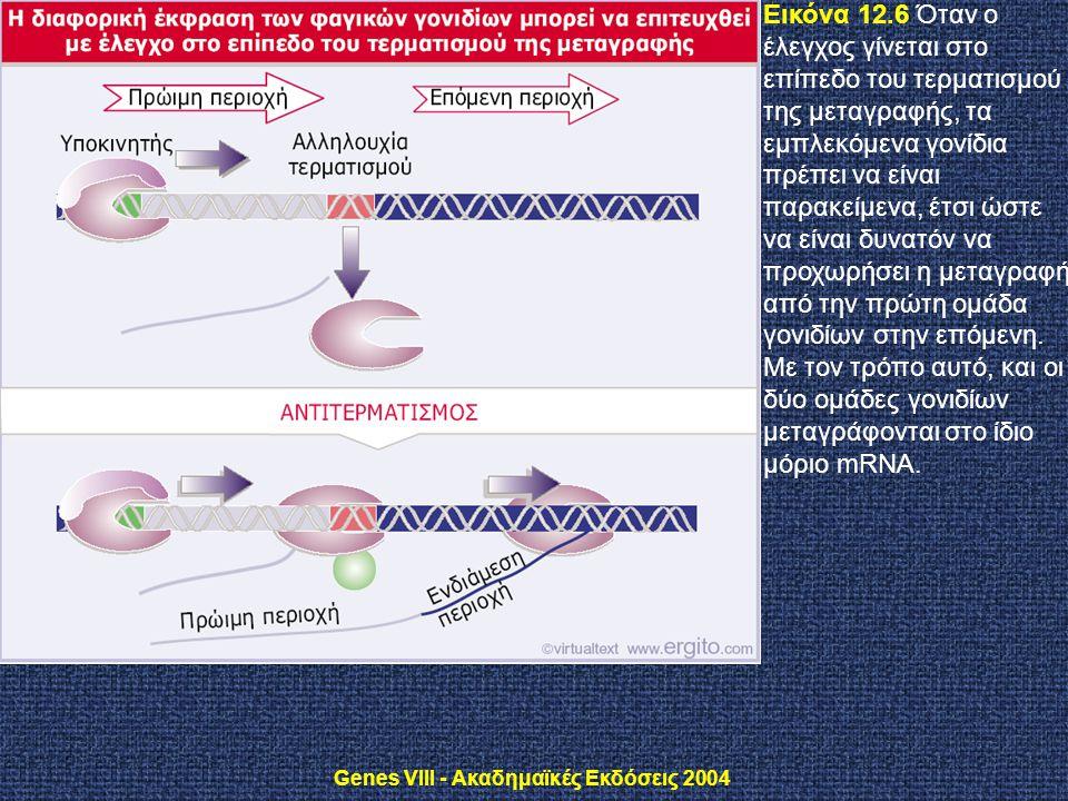 Genes VIII - Ακαδημαϊκές Εκδόσεις 2004 Εικόνα 12.6 Όταν ο έλεγχος γίνεται στο επίπεδο του τερματισμού της μεταγραφής, τα εμπλεκόμενα γονίδια πρέπει να