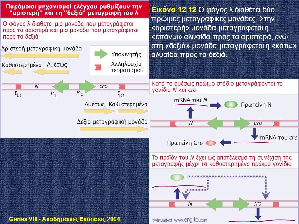 Genes VIII - Ακαδημαϊκές Εκδόσεις 2004 Εικόνα 12.12 O φάγος λ διαθέτει δύο πρώιμες μεταγραφικές μονάδες. Στην «αριστερή» μονάδα μεταγράφεται η «επάνω»
