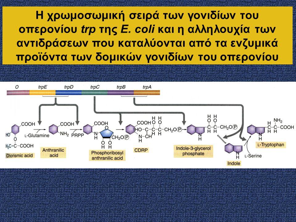 Η χρωμοσωμική σειρά των γονιδίων του οπερονίου trp της E. coli και η αλληλουχία των αντιδράσεων που καταλύονται από τα ενζυμικά προϊόντα των δομικών γ